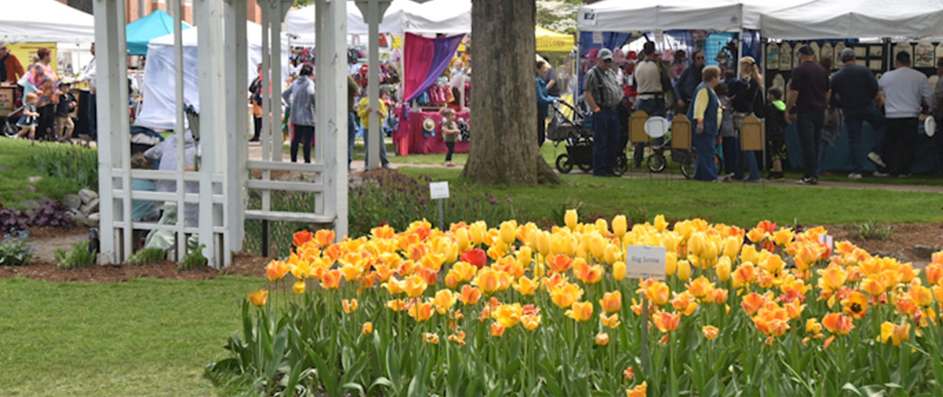 Tulip Time Activities